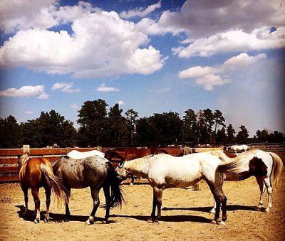 pferdetraining1