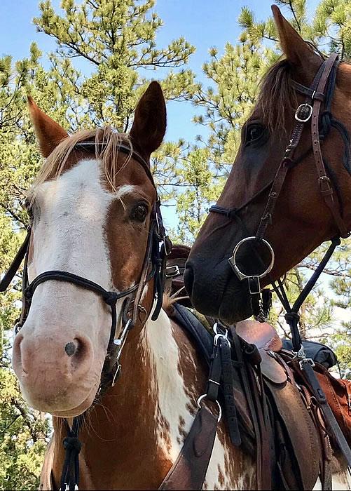 pferdetraining2