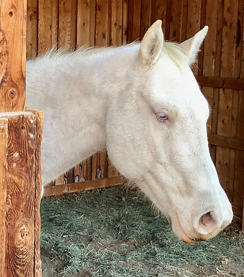 pferdetraining3
